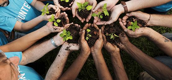 rośliny na dłoniach